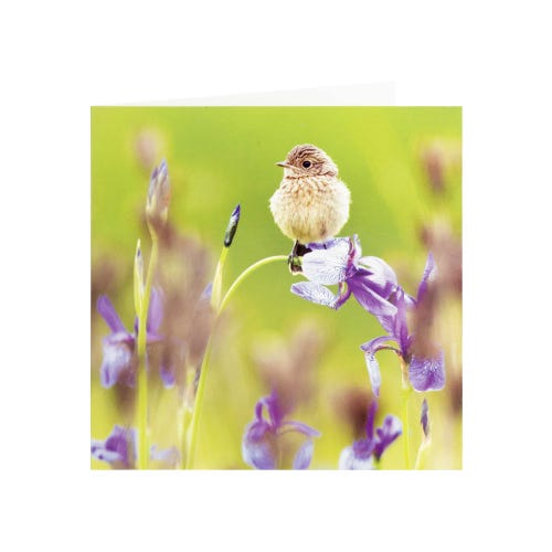 RSPB Baby Stonechat Blank Card