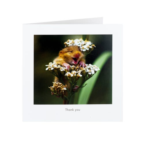 Wildlife Photography Thank You Card