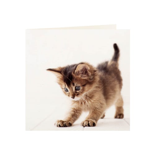 Kitten Pouncing Blank Greeting Card