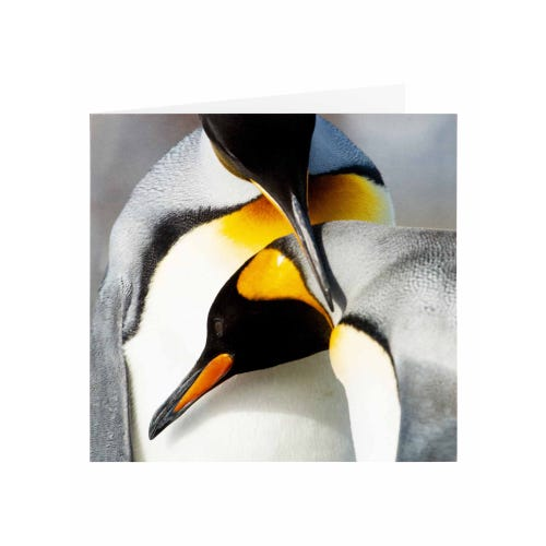 BBC Earth Penguins Blank Greeting Card