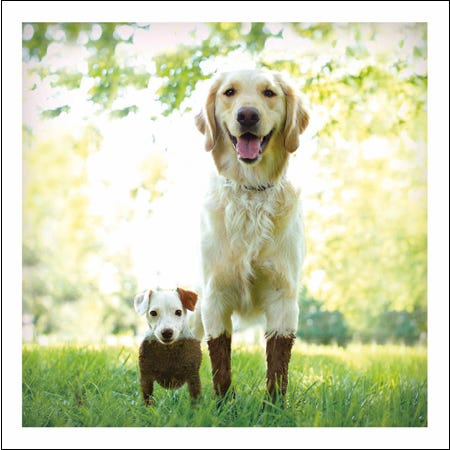 Small Dog And Big Dog Covered In Mud Blank Card