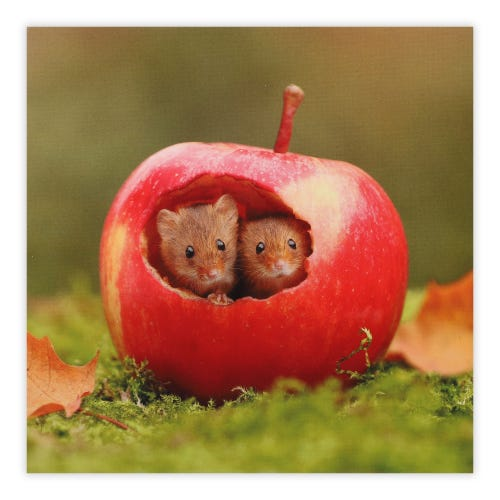 Mice In Apple Photographic Card