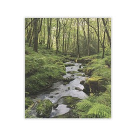 Simply Clintons Photographic Forest River Stream