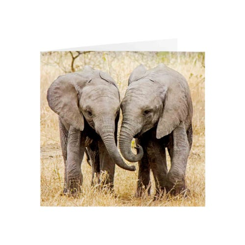 Two Elephants Photographic Blank Card